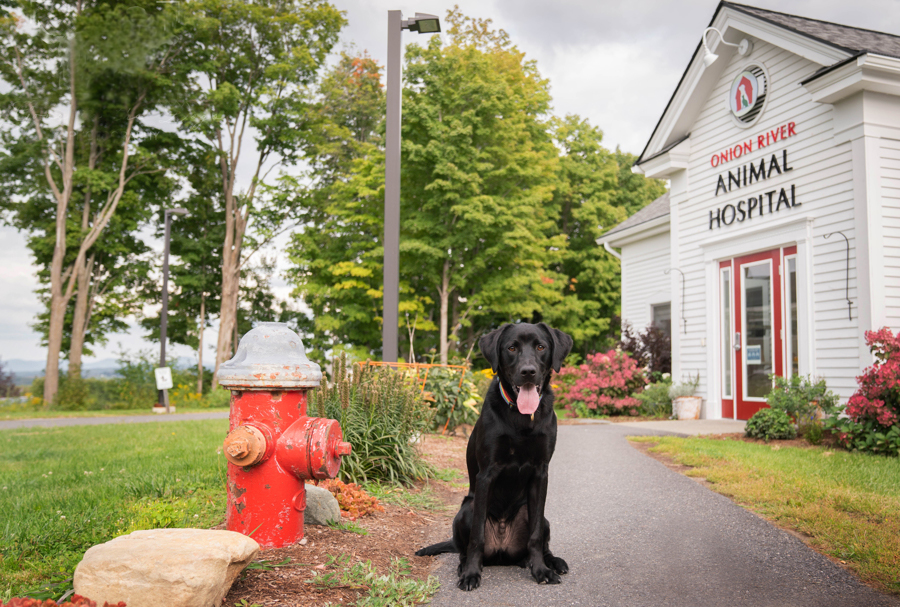 Veterinarian in Berlin, VT